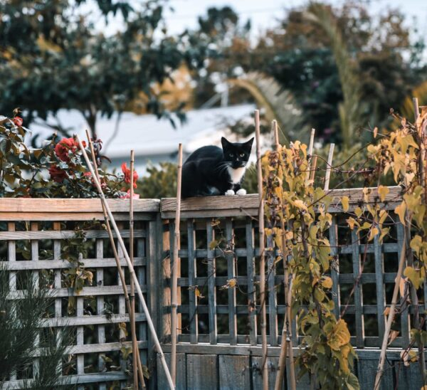 A small black and white cat is pictured perched on top of a fence. The fence is surrounded by plants