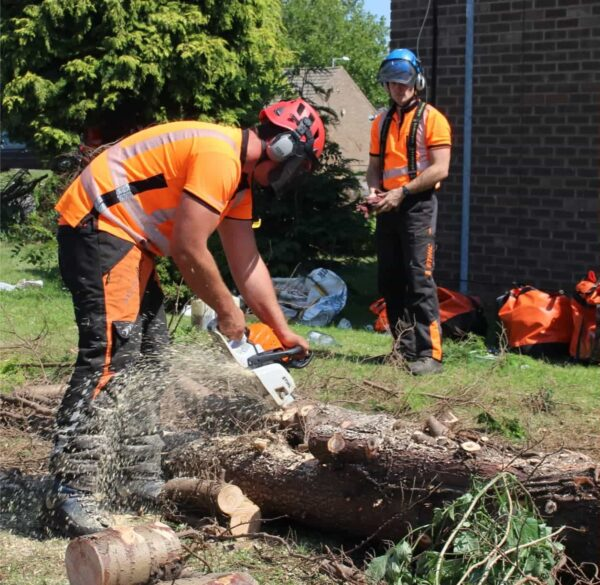 Two men dressed in hi-vis clothing and wearing a red helmet and a blue helmet are working. One man stand far back watching the other man using a saw to cut through a fallen tree trunk. Saw dust sprays to the left side of the picture.