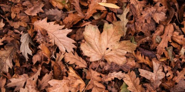 Service card –Leaf collecting